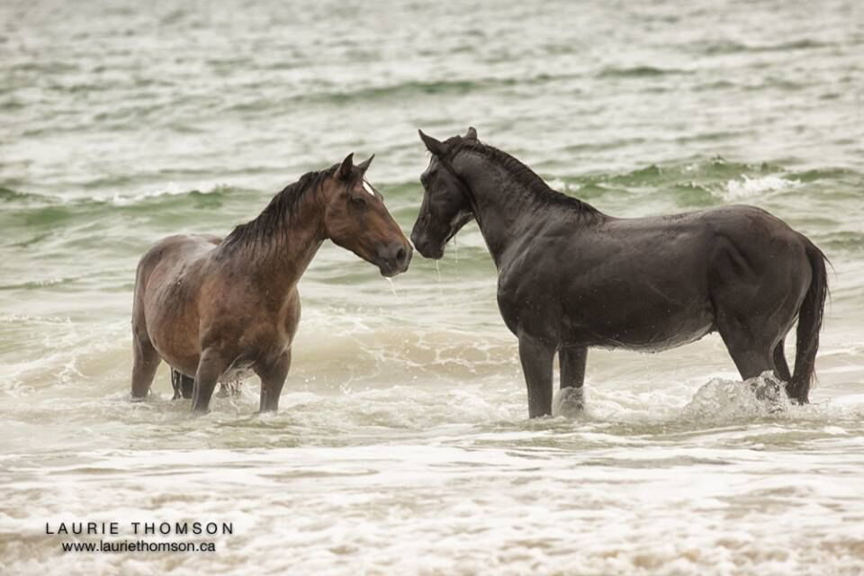 Wild Horse Adventure Tours Outerbanks Com