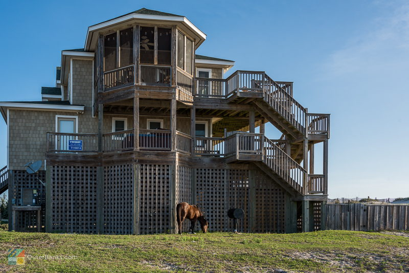 Check Out The Wild Horses In Their Tour Video Here Or Call 252 489 2020 For More Information