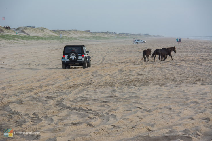 A Jeep stops for the wild horses in Carova