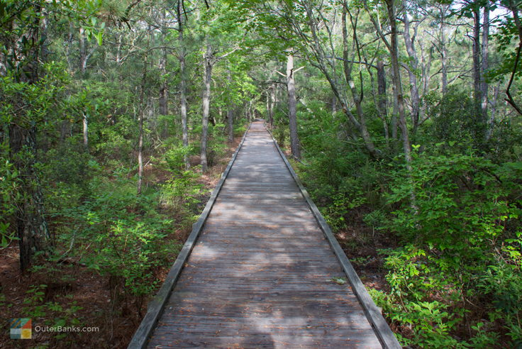 Currituck Banks Coastal Estuarine Reserve