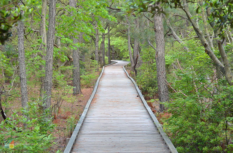 An elevated walking path in Currituck Banks  Estuarine Reserve