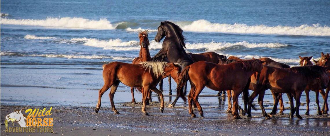 Wild Horses Nc Tours