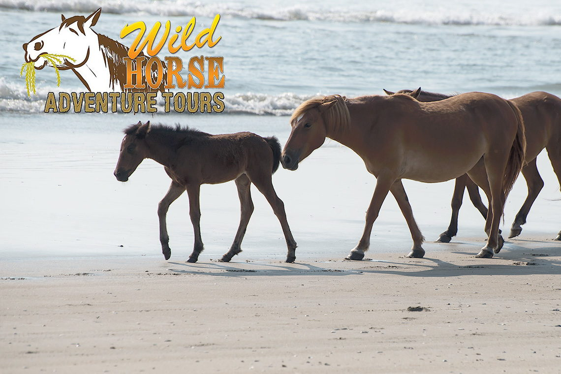 Top Outer Banks Wild Horse Tours For 2018 Outerbanks Com