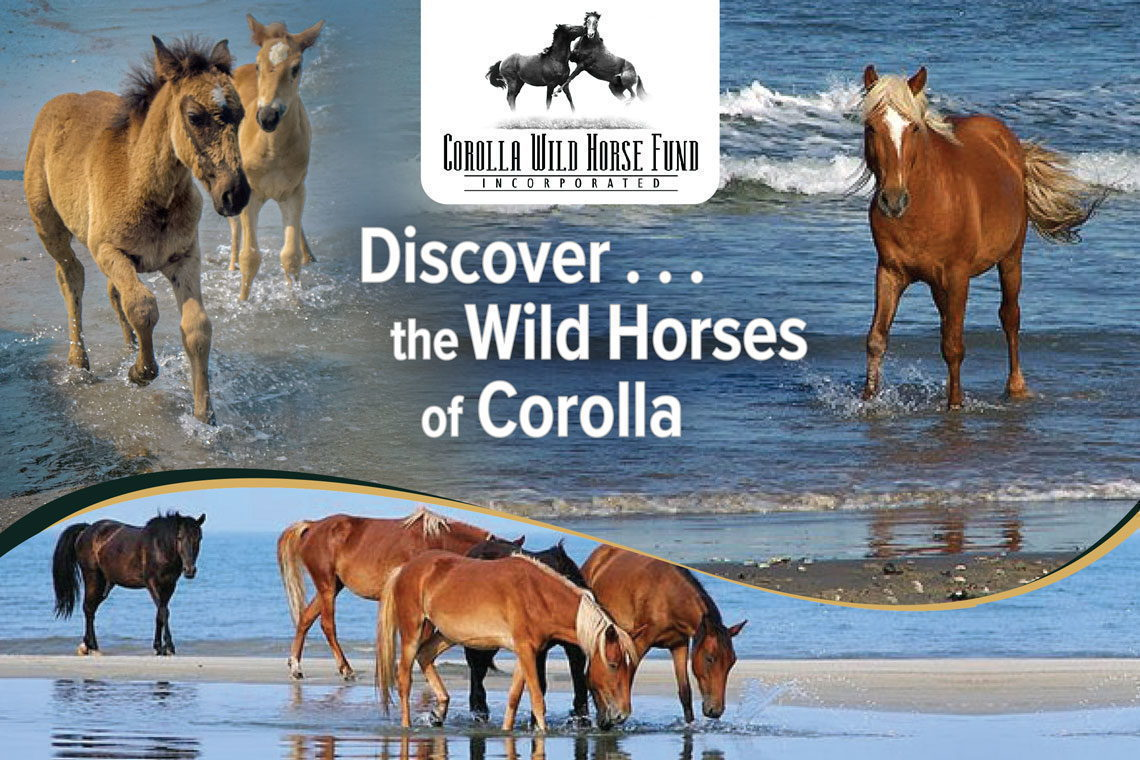 best place to see wild horses in outer banks