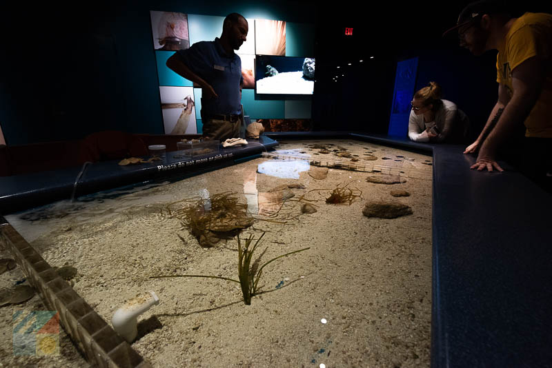 NC Aquarium on Roanoke Island