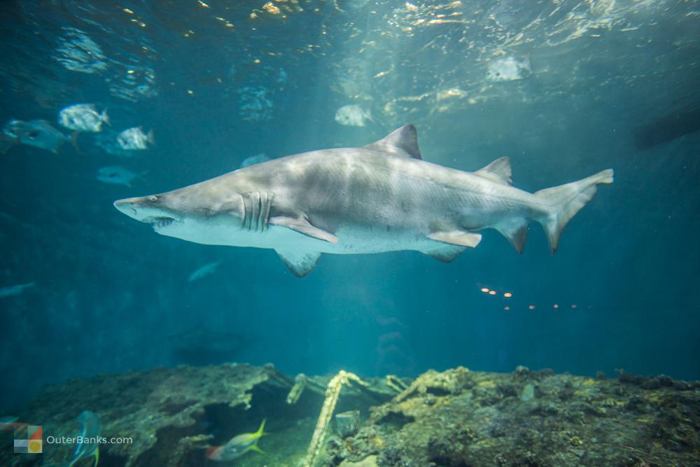 North Carolina Aquarium on Roanoke Island - OuterBanks.com