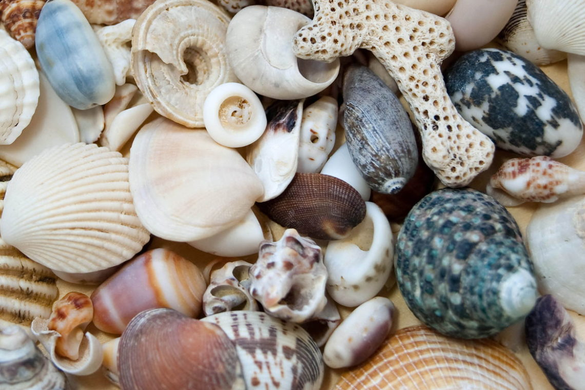 Shelling - OuterBanks.com